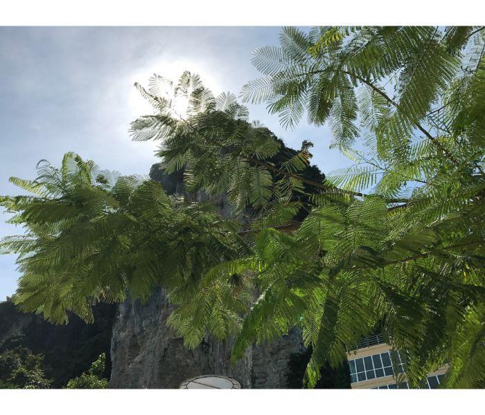 カイ島断崖